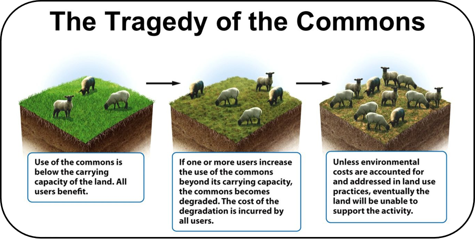 Tragedy of the Commons | Sustainable Environment Online